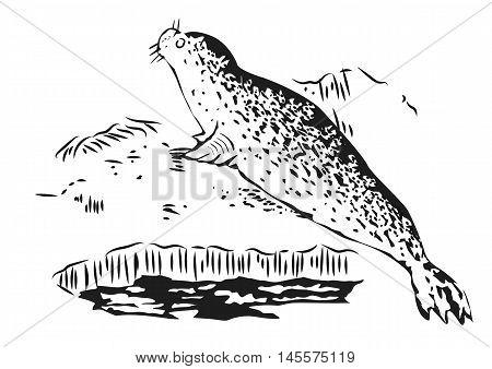 Antarctic fur seal resting on ice. Hand drawn illustration