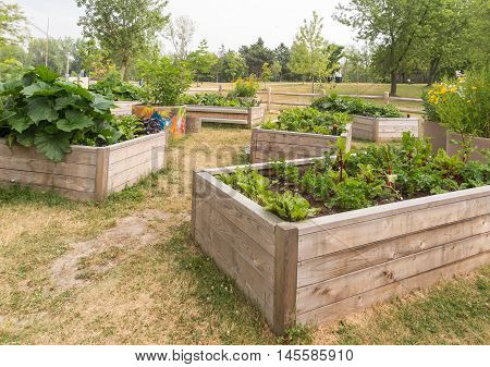 Raised garden beds in neighborhood garden in park