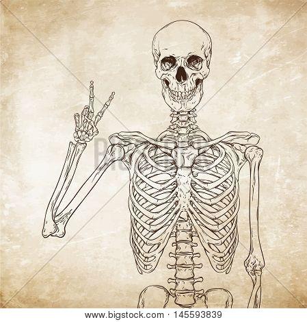 Human Skeleton Posing Over Old Grunge Paper Background Vector