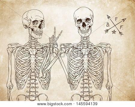 Human Skeletons Best Friends Posing Over Old Grunge Paper Background Vector