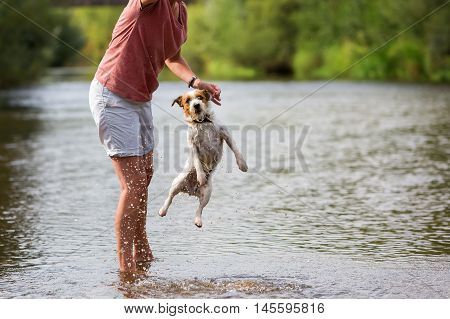 Woman Plays With A Parson Russell Terrier