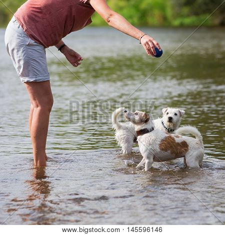 Woman Plays With Parson Russell Terrier