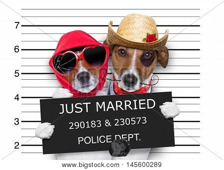 Mugshot Just Married Dogs