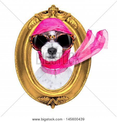 Diva Chic Dog