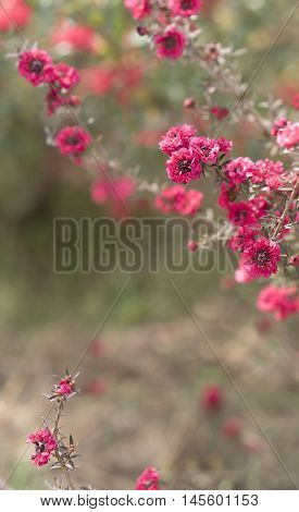 Pink flowers on condolences background for sympathy greeting card for death funeral or tragedy