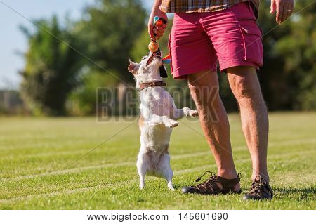 Man Plays With His Dog On The Meadow