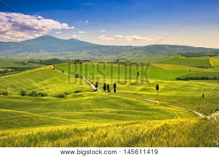 Tuscany landscape rural road trees and wheat field. Crete Senesi Italy Europe