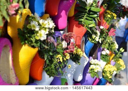 colorful flowers in typical Dutch wooden clog, bright flower background