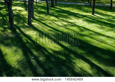 Shadows of tree branches lie over the green lawn on grass in park