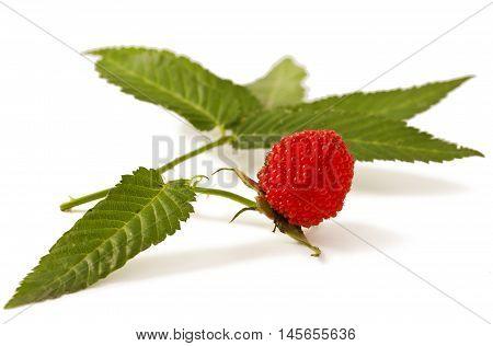 Rubus illecebrosus isolated on white background. Balloon berry