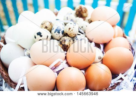 eggs on eggs background,raw food for cooking