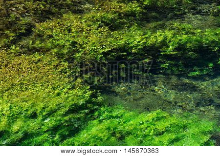 Emerald green flowing river water with seewead abstract background river Sourge Fontaine-de-Vaucluse