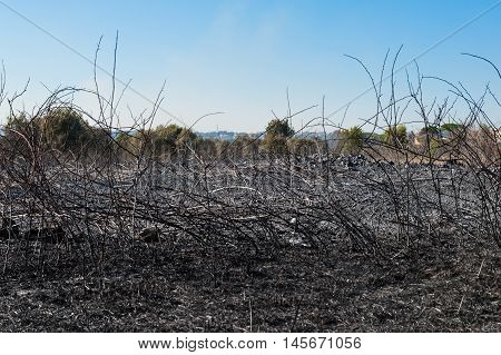 Burned Field And Scorched Earth