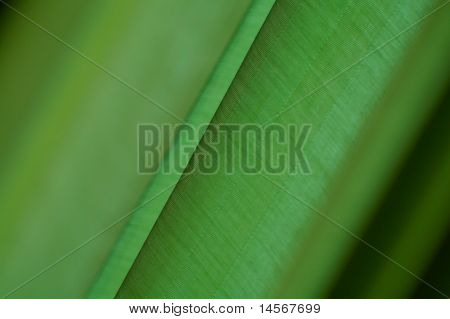 Green Background With Diagonal Lines