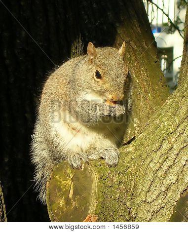 A Squirrel Eating An Almond