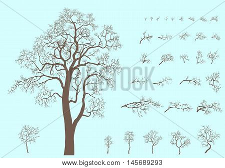 Set of branches and tree formed from these branches. Silhouette of acacia without leaves.