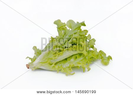 Salad Vegetable Leaf Isolated On White Background
