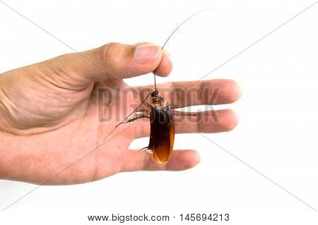 Man holding dead cockroach isolate on white background