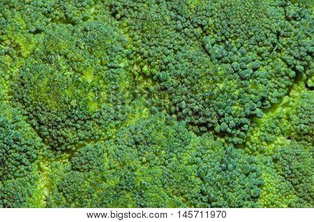 Brocolli background detailed close-up flat focus, color image, horizontal image