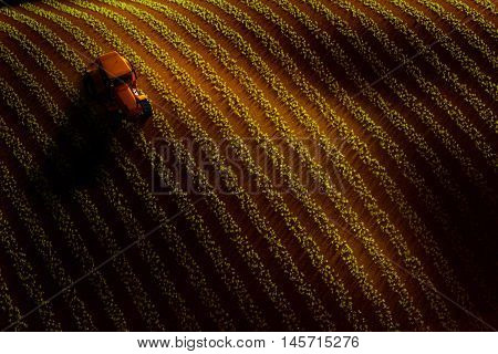 3d illustration of aerial view of field with rows of growing crop or vegetables and tractor ploughing it. Sunset or sunrise light
