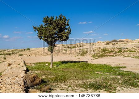 Tree and grass in Makhtesh Gadol or Large Crater, nature reserve in Negev desert in the spring, Israel