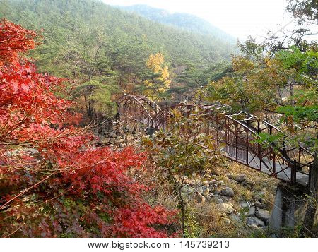 Beautiful Color of Autumn on the Mountainside of South Korea