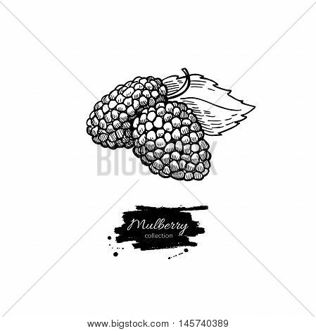 Mulberry vector superfood drawing. Isolated hand drawn illustration on white background. Organic healthy food. Great for banner poster label