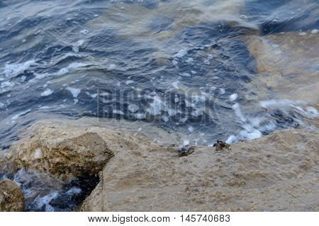 Mussels and crustaceans at the seashore - Italy