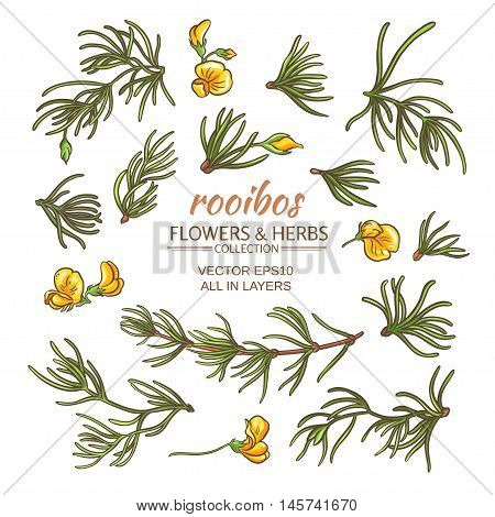 rooibos leaves and flowers vector set on white background