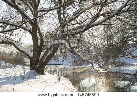 Winter River Tree
