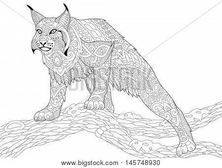 Stylized hunting wildcat (lynx american bobcat caracal) ready to attack isolated on white background. Freehand sketch for adult anti stress coloring book page with doodle and zentangle elements.