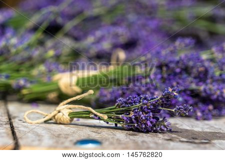 Lavendula is native to the Old World and is found from Cape Verde and the Canary Islands Europe across to northern and eastern Africa the Mediterranean southwest Asia to southeast India