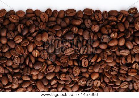 Seeds On Line
