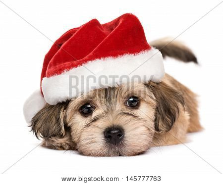 Close up of a cute lying Bichon Havanese puppy dog in Christmas hat - Isolated on a white background