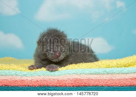 Newborn gray kitten eyes closed laying on yellow aqua peach orange and green towels with blue sky cloud background.