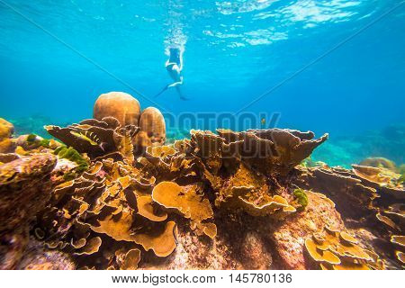 Typical seabed of Phuket, Racha Noi in Thailand. Landscape for background. On background a woman snorkeler.