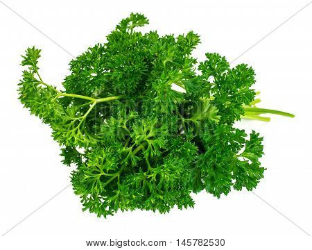 Fresh Green Parsley Isolated on White Background Studio Photo