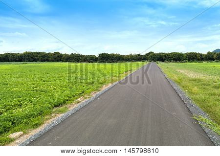 asphalt road between field with blue sky country side view at Lopburi Thailand
