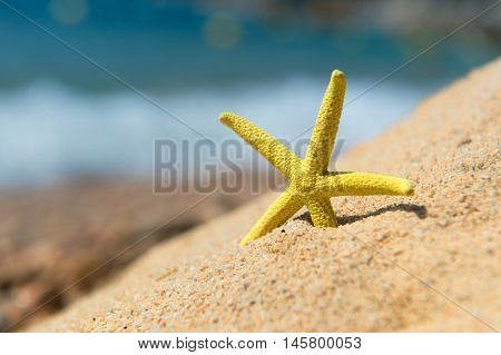 Yellow starfish at the beach