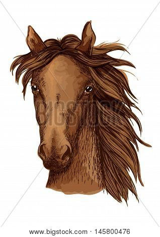 Beautiful brown horse artistic portrait. Bay mustang stallion with long wavy mane looking straight forward. Equestrian sport
