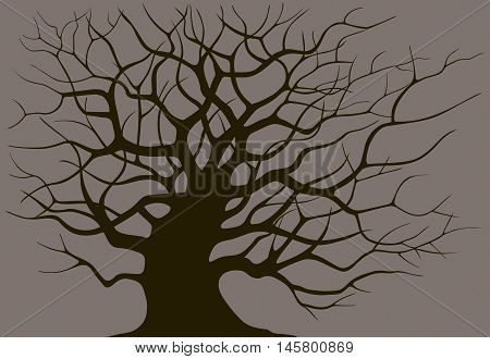 Silhouette branching of an old tree on a dark background