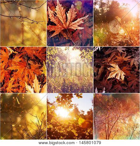 Orange and Yellow Autumn collage