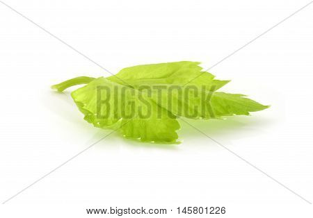 Fresh celery leaf closeup on white background