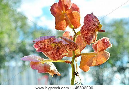 beige stem of orchid flower, closeup orchid flower