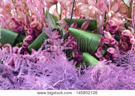 Pink floral texture closeup, flowers background, pink orchids