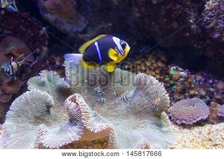 Coral Life Marine Sea Diving Underwater World