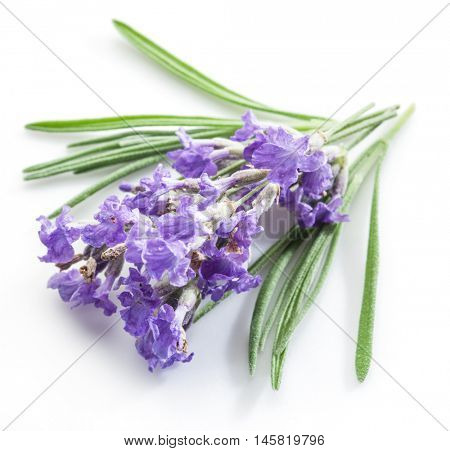 Bunch of lavandula or lavender flowers isolated on white background.