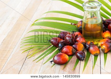 Commercial Palm Oil Cultivation. Since Palm Oil Contains More Saturated Fats Than Oils Made From Can