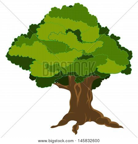 Green tree with foliage on white background is isolated