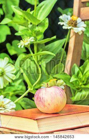 Apple and book on a wooden garden chair among the flowering white zinnias in the garden on a summer day close-up. Selective focus